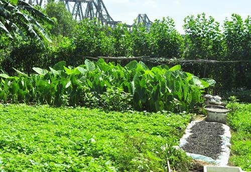 Tả vườn rau nhà em